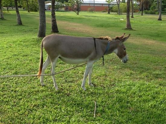 Coconut Bay Beach Resort & Spa: one of the hotel Donkeys!