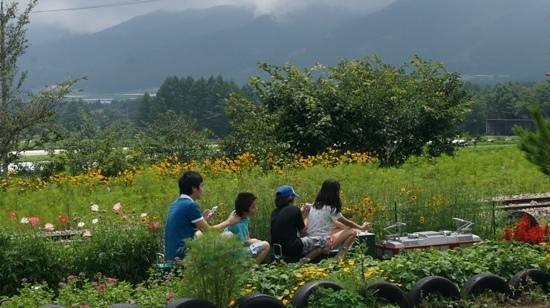 Nobeyama SL Land : ちっちゃなSLも楽しかったです。コスモスや花畑の壁の間をぬって走るのは、爽快!子供達も楽しそうでした!