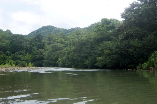 Dominical Surf Adventures : View while floating down the Baru river when not on the rapids.
