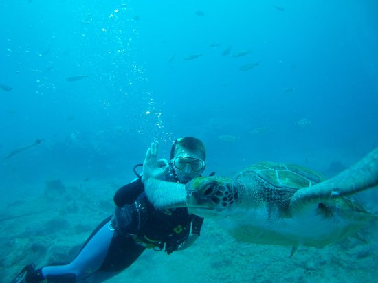 Buceo Tenerife : Great Memories