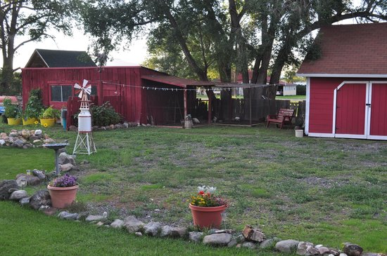 Red Brick Inn of Panguitch B&B: Chickens out back