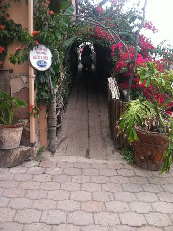 Los Pelicanos Restaurant & Bar: Lovely walk through bougainvillea covering