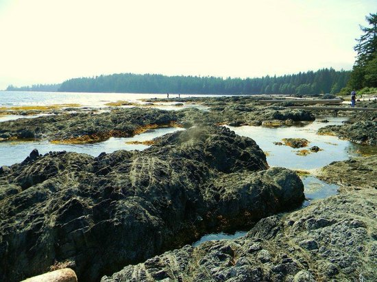 Mussel Beach Campground: tide pools on beach