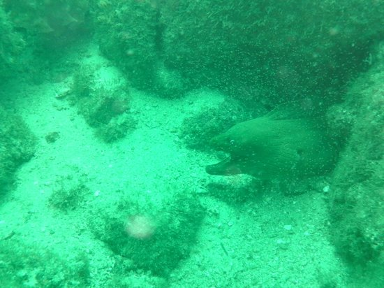 Charlie's Adventure Tours: Absolutely enormous moray down about 76 ft.