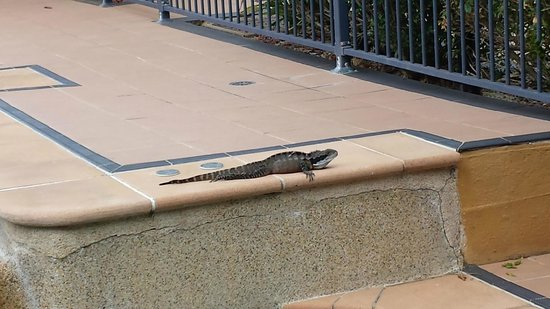 South Pacific Apartments: Steve the Resident Water Dragon