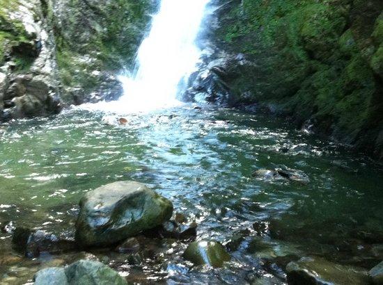 Ohau Waterfall Walk and Seal Pups: Seal pups, Ohau Waterfall, Kaikoura