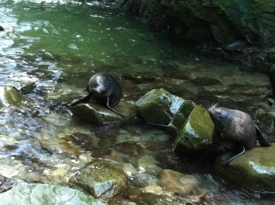 Ohau Stream Walk: Seal pups, Ohau Waterfall, Kaikoura