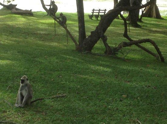 Cinnamon Lodge Habarana: In the grounds