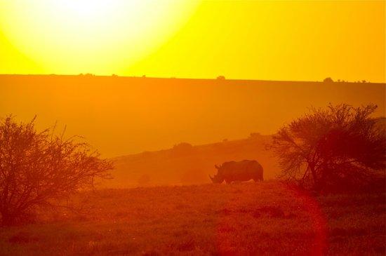 Bukela Game Lodge: On safari