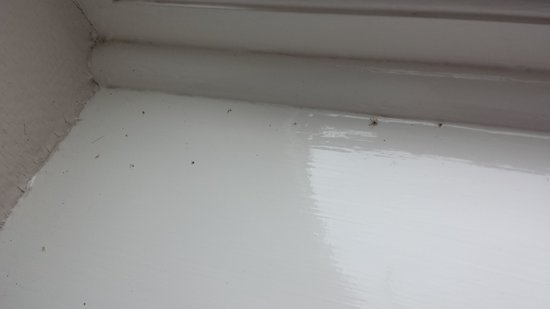 Hedley House: dead flys