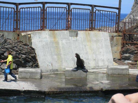 Otaru Aquarium - Picture of Otaru Aquarium, Otaru - TripAdvisor