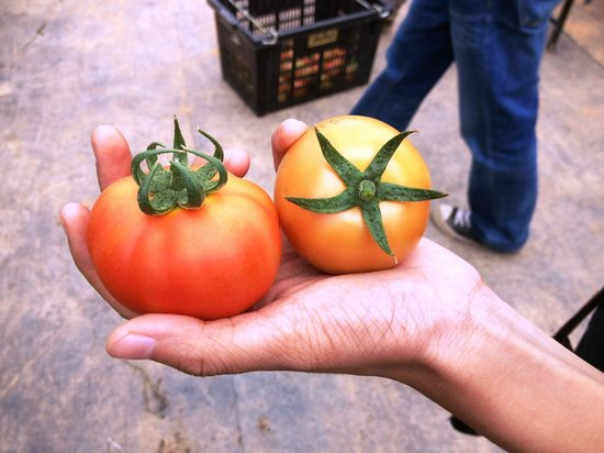 Moonriver Lodge: Tomatoes from the farm