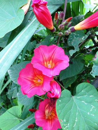 Moonriver Lodge: Area is bursting with flowers