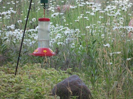 Milts Stage Stop: Hummmingbird feeder beside window
