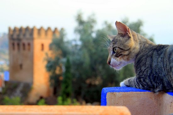 Cat at La Lampe Magique with the old fort in the background