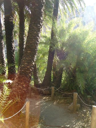 Olive Grove Apartments-Studios: Preveli