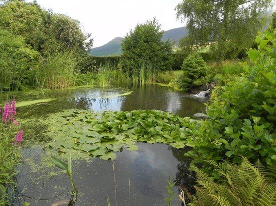 Spooney Green B&B: The pretty pond