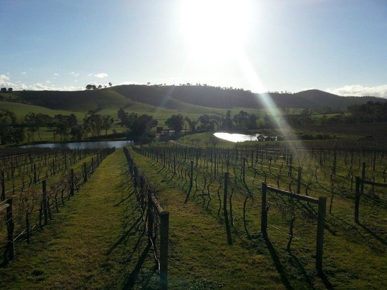 Wild Wombat Winery Tours: Warm, inviting sun and view