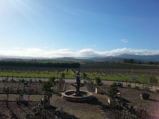 Wild Wombat Winery Tours: Glorious, sunny day