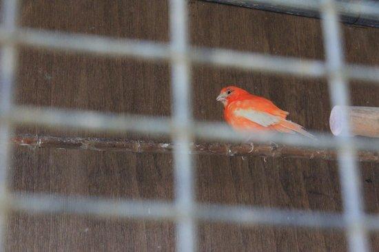 Valais Hotel: Клекта с птицыми местной фауны на территории отеля