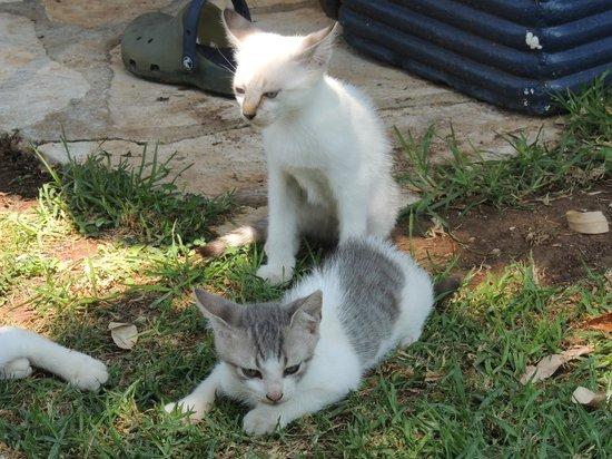 Cavo Barbaro: famiglia di gattini