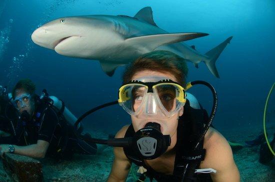 Κόλπος Simpson (Λιμνοθάλασσα), Άγιος Μαρτίνος: Sharkdive