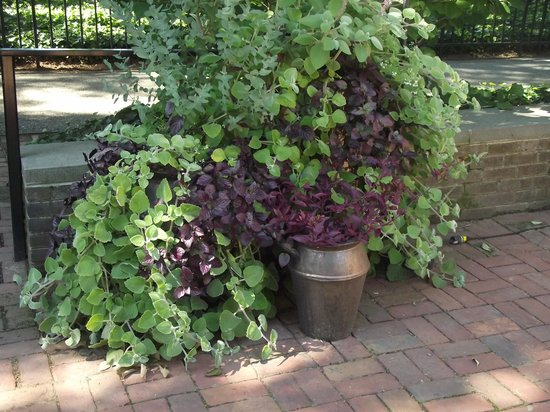 The Cafe: cafe outdoor planter