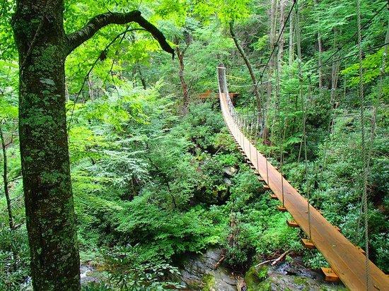Sky Valley Zip Tours : The suspension bridge