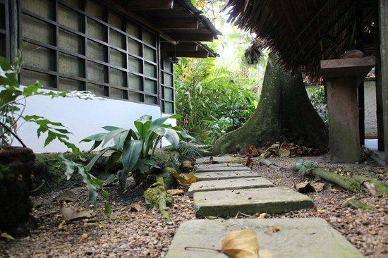 Hotel Malokamazonas : Arbol central zapote