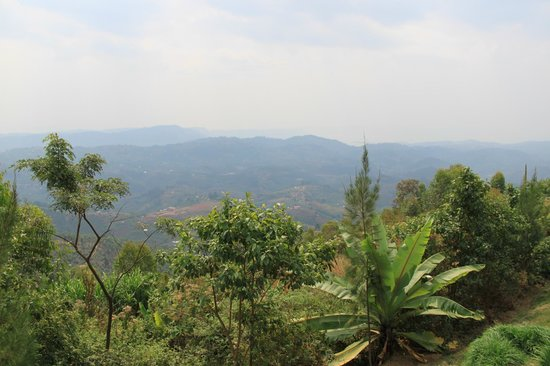 Nyungwe Top View Hill Hotel: View from the veranda