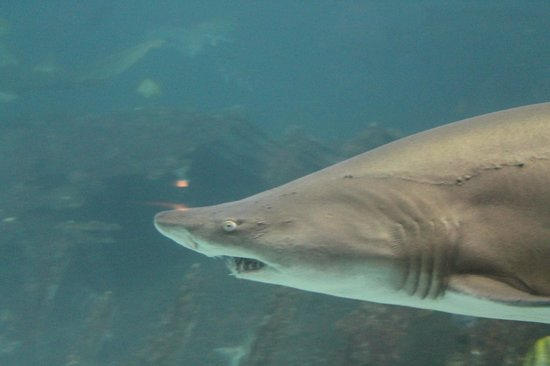 North Carolina Aquarium on Roanoke Island: Up close and personal