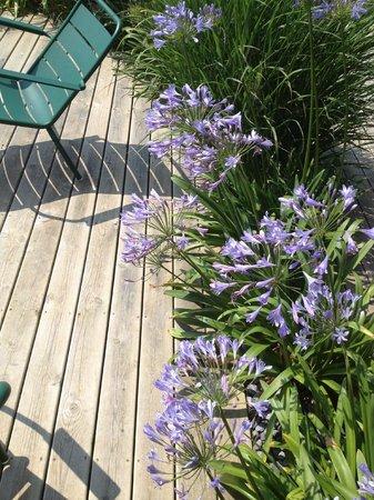 Le Grand Large : Jardin et fleurissement superbe
