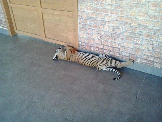 Safari Ravenna: Uno dei due cuccioli di Tigre nella Nursery