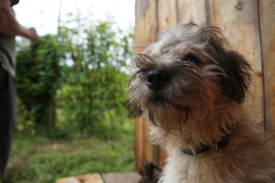 El Refugio de Intag Lodge: Daisy the pup