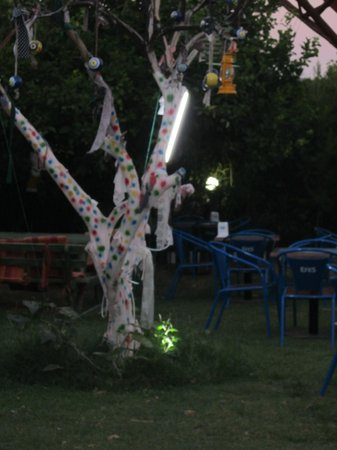 Palmiye Restaurant : Turkish eye tree