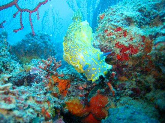 Baratti Diving