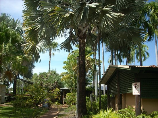 Cooinda Lodge Kakadu: lovely gardens