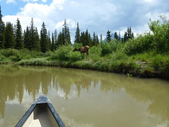 Family Canoeing Along The Bow River Picture Of Blue