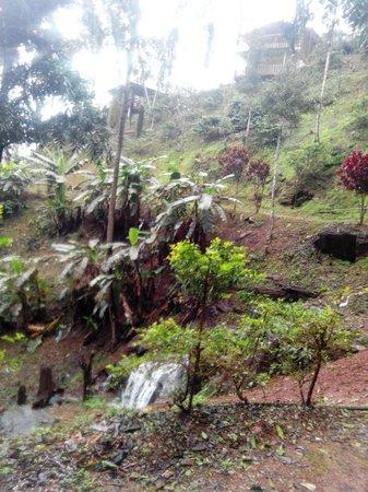 View of Serene Woods