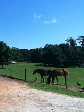 Inn at Serenbe: horses, there are also stables for riding