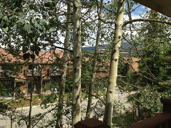Wedgewood Lodge: Aspen trees