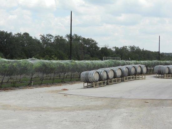 Dry Comal Creek Vineyards : grounds