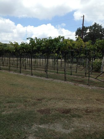 Dry Comal Creek Vineyards : Grounds