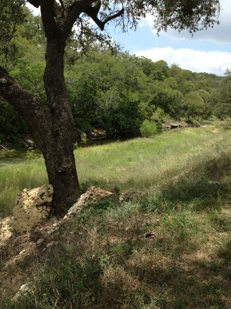 Dry Comal Creek Vineyards: grounds