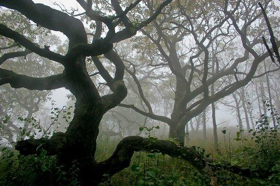 A restored oak savanna in Garvin Heights Park