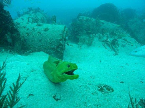 Scuba Dive It: eel
