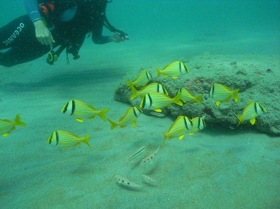 Scuba Dive It: fish