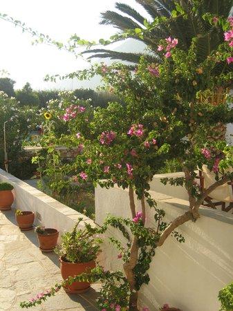 Morfeas Pension: Μπαλκόνι - Κήπος
