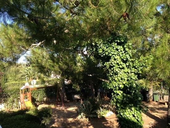 Villa Vittoria B&B: villa vittoria's garden