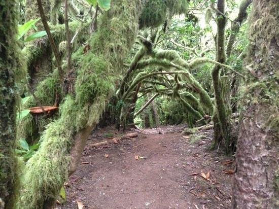 Florence, OR: Hobbit Trail has really cool scenery